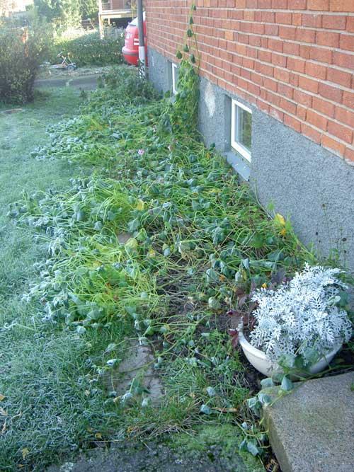 frostkrasse